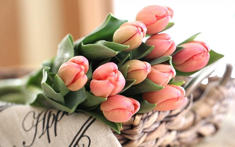 Tặng hoa tulip cho người yêu ngày Phụ nữ Việt Nam 20/10
