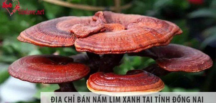 Địa chỉ bán nấm lim xanh rừng uy tín tại tỉnh Đồng Nai